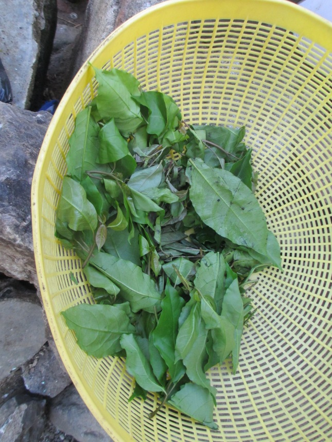 These leaves are used in dishes like rice or soup.  They are said to be very high in nutrients
